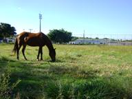 O Gramado do campo do Barro Preto