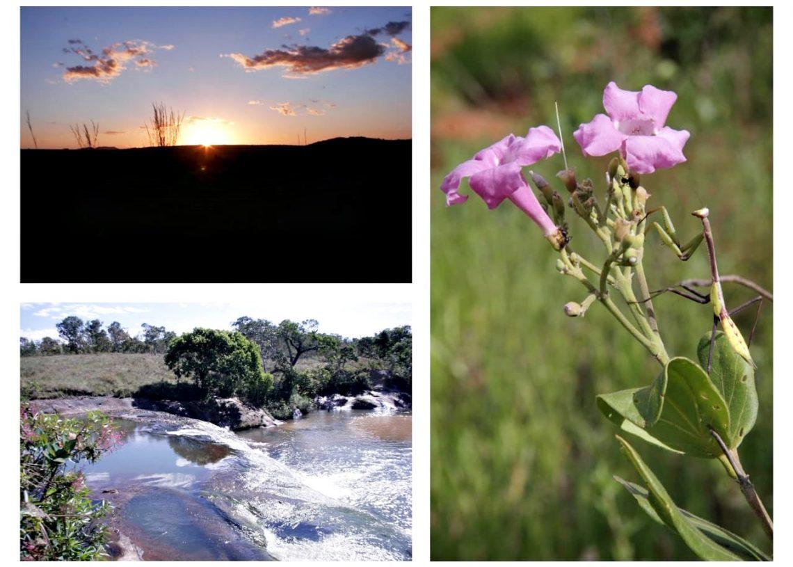 Exposição Cerrado LBV (1)