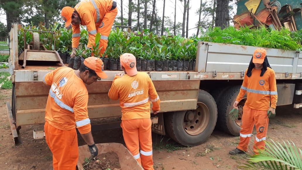 Mais de 500 mil mudas de plantas nativas já foram plantadas em pontos estratégicos