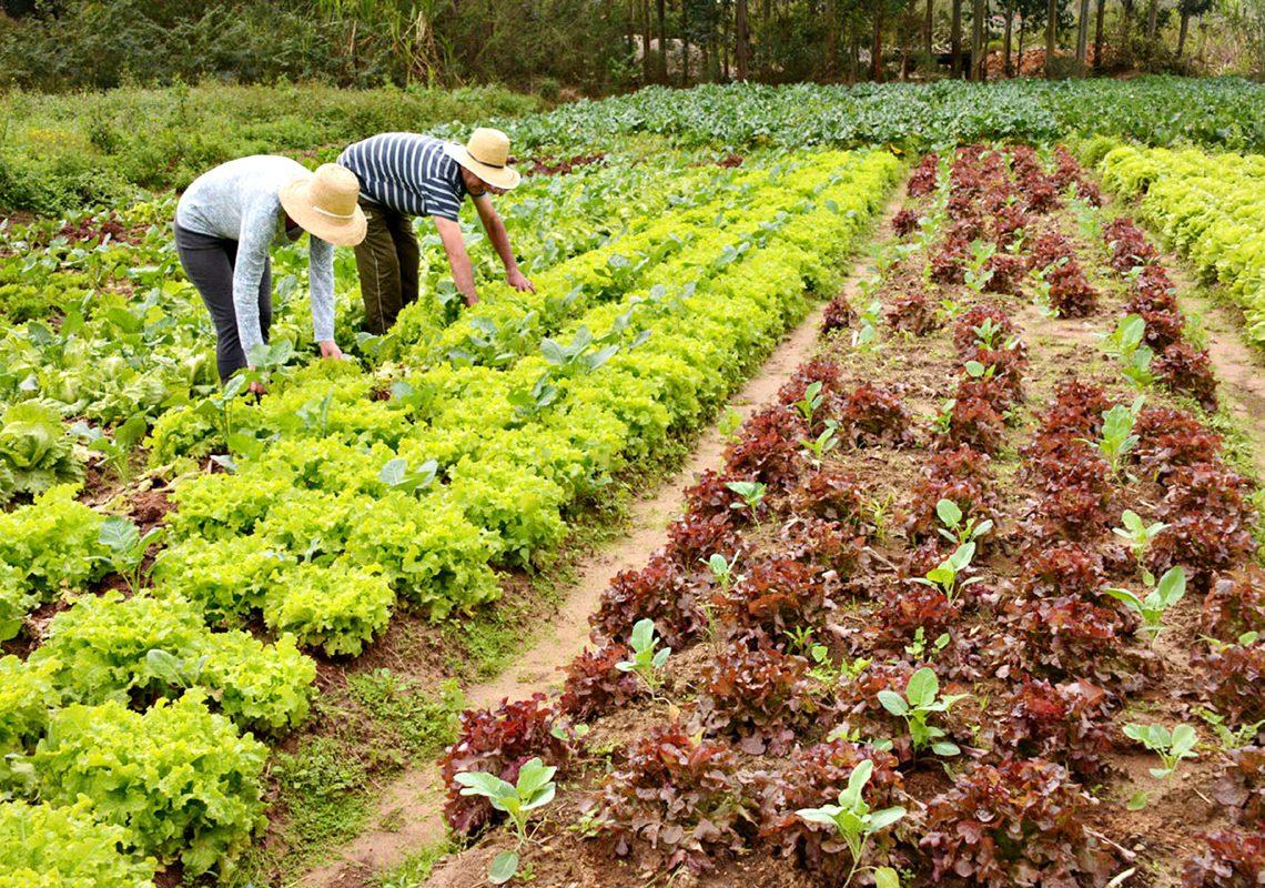 Agricultura Familiar ILustração