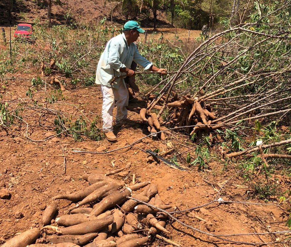 Agricultor familiar do Assentamento Rio Bonito, em Cavalcante, durante compra teste de mandioca pela Ambev para produção de cerveja regional goiana (Foto: Raíssa Rodrigues / Secretaria da Retomada)