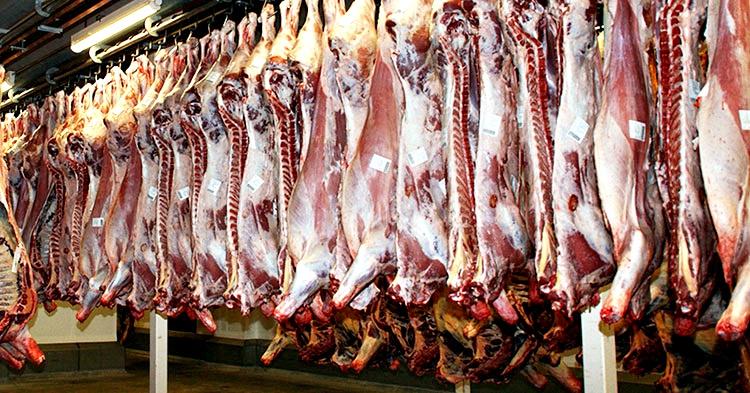 setor carne
