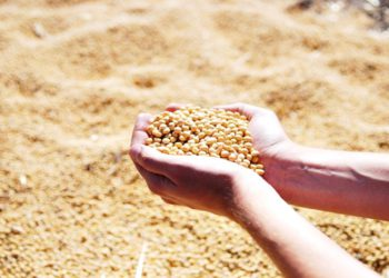 Goiás produzir grãos