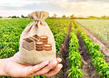 PIB AGRO Setor Agropecuário