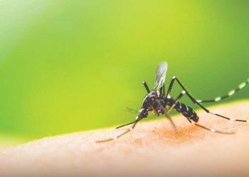 A dengue trata-se de uma doença causada por infecção pelo vírus da família Flaviviridae (Foto: Internet)