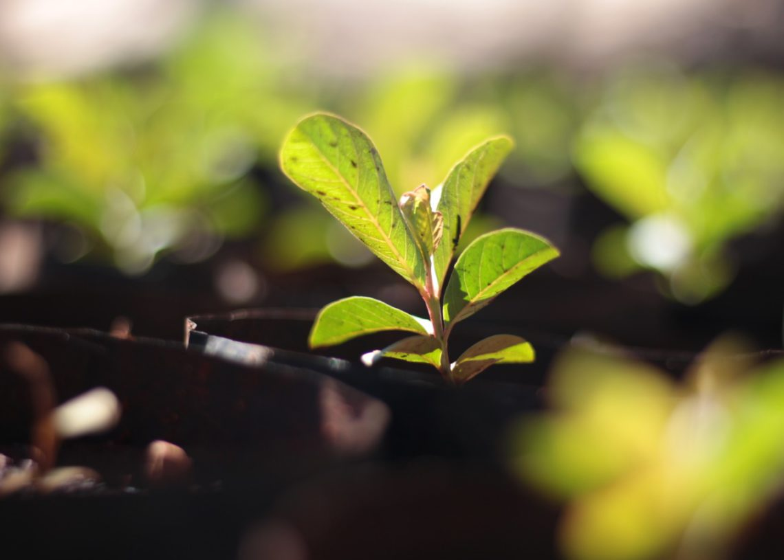 Resultado inédito deve converter R$ 3,5 milhões aos cofres por conta do ICMS Ecológico. (Foto: Divulgação/Prefeitura)